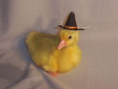 Gosling Witch